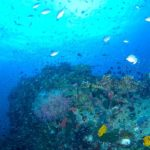 Таиланд — подводное плавание