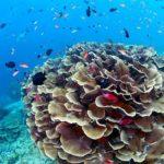 Сипадан — подводное плавание