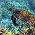 Гавайи - подводное плавание