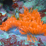 Микронезия — подводное плавание