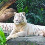 Объедините Сингапурский зоопарк и ночное сафари