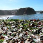 Стеклянный пляж (Glass Beach), Калифорния