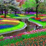 Кёкенхоф, Нидерланды - уникальные места по всему миру
