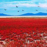 Красный пляж Паньцзинь, Китай - уникальные места