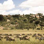 Национальный парк Серенгети, Танзания - уникальные места