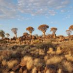 Лес Колчана - Уникальные Места Намибии