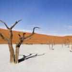 Deadvlei (Окаменевшие деревья в пустыне) - уникальные места Намибии