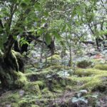 Гарахонай (Garajonay) Национальный парк Канарских островов Испании