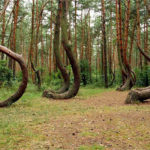 Кривой Лес - Уникальные Места Польши