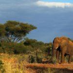 Национальный парк Крюгера, Южная Африка - уникальные места