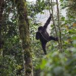 Находящиеся под угрозой исчезновения объекты всемирного наследия в Демократической Республике Конго