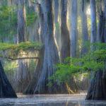 Озеро Каддо и Затопленный Лес — Уникальные Места в Техасе
