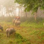 Национальный парк Читван, Непал