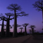 Аллея баобабов - уникальные места Мадагаскара