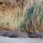 Объекты всемирного наследия ЮНЕСКО в Южной Африке