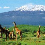 Объекты всемирного наследия ЮНЕСКО в Танзании