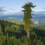 Самые большие национальные леса в Соединенных Штатах