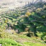 Оливковая страна - Баттирские рощи и виноградники Палестины