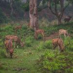 Объекты всемирного наследия ЮНЕСКО в Непале