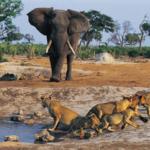 Объекты всемирного наследия ЮНЕСКО в Сенегале