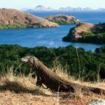 Объекты всемирного наследия ЮНЕСКО в Индонезии