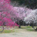 Чудеса Японии: три великих сада Японии