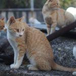 Кошачий остров Тасироджимы - уникальные места по всему миру