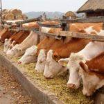 Сельское хозяйство Венгрии