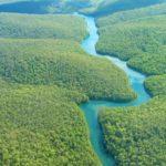 Река Амазонка и Раймондийская сосна, Перу
