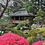 Чайные сады Японии